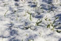 Terra coberta com a neve imagens de stock