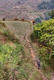 Terra coltivata in montagne Cina sudoccidentale, terrazzi del riso, Immagini Stock