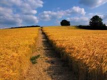 Terra com colheitas do cereal fotografia de stock royalty free