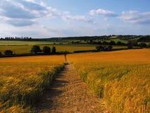 Terra com colheitas do cereal foto de stock