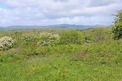 Terra comum de Orley, Devon Fotografia de Stock