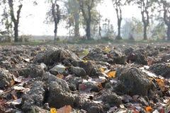 Terra con gli alberi in autunno Fotografie Stock Libere da Diritti