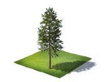 Terra cortada com grama e árvore isolada no branco Foto de Stock Royalty Free