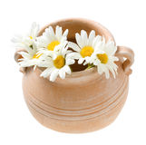 Terra Cotta Flower Pot with Daisies. Isolated on white Stock Photos
