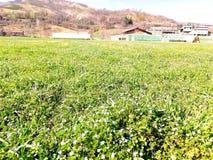 Terra cultivada e grama verde nova da mola em ondular o terreno montanhoso fotografia de stock royalty free