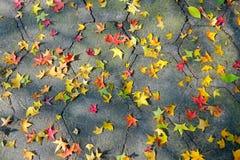 terra d'autunno Fotografie Stock Libere da Diritti