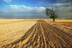 Terra da árvore Imagem de Stock