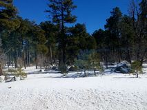 Terra da maravilha do inverno imagens de stock