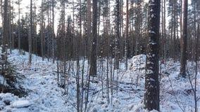 Terra da maravilha do inverno Foto de Stock