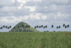 Terra da palma Imagem de Stock Royalty Free