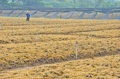Terra da preparação do solo para o cultivo vegetal Foto de Stock Royalty Free