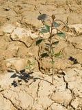 Terra da seca Imagem de Stock