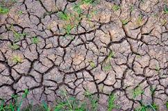 Terra da seca Terra estéril Seque terra rachada Teste padrão rachado da lama Fotografia de Stock