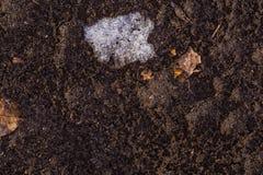 Terra de debaixo da neve Foto de Stock
