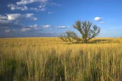 Terra de exploração agrícola Fotografia de Stock