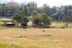 Terra de exploração agrícola Imagem de Stock Royalty Free