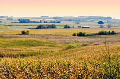 Terra de exploração agrícola de Iowa do nordeste Imagens de Stock