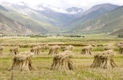 Terra de exploração agrícola perto da montanha Fotos de Stock Royalty Free