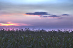 Terra de Padana Fotos de Stock