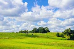 Terra de pasto Foto de Stock