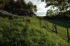 Terra de pasto na manhã Imagens de Stock Royalty Free