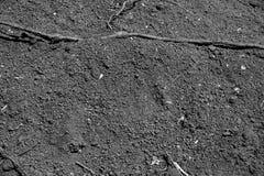 Terra del cernozem ricchi neri fertili di un suolo in humus, con una luce immagine stock libera da diritti