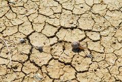 Terra del deserto su cui le lumache strisciano immagine stock