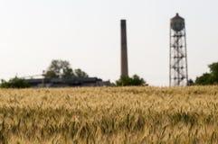 Terra del grano Fotografia Stock