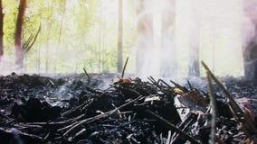 Terra dell'abetaia che fuma dopo la videoripresa fresca di nuova di qualità del fuoco vista scenica della natura stock footage