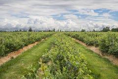 Terra dell'azienda agricola