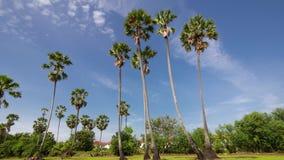 Terra dell'azienda agricola e la palma da zucchero in Tailandia stock footage