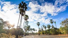 Terra dell'azienda agricola e la palma da zucchero in Tailandia nella provincia di Nonthaburi stock footage