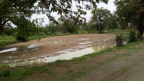 Terra dell'inquadratura che coltiva paesaggio agricolo Fotografia Stock Libera da Diritti