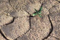 Terra della crepa con la pianta Fotografia Stock Libera da Diritti