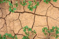 Terra della crepa con le piante Fotografia Stock