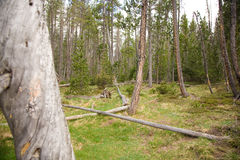 Terra della foresta immagine stock