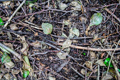 Terra della foresta di estate Fondo, struttura, natura immagine stock libera da diritti