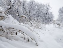 Terra della neve Immagine Stock Libera da Diritti