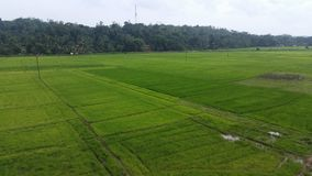 Terra della risaia nello Sri Lanka fotografia stock libera da diritti