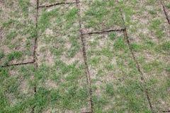 A terra desdobrada rola com grama verde, grama é qualidade muito má, imagens de stock