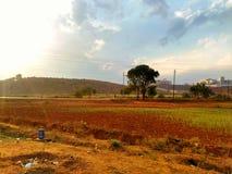 Terra di agricoltura immagini stock