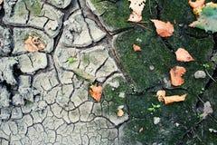 Terra di autunno Fotografie Stock