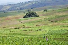 Terra di azienda agricola - Tanzania Fotografia Stock Libera da Diritti