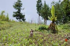 Terra di azienda agricola - Tanzania Immagini Stock