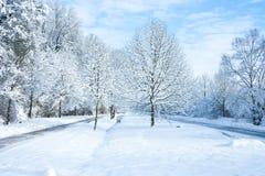 Terra di meraviglia di inverno - nel parco Fotografia Stock Libera da Diritti