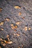Terra di pietra sabbiosa con le foglie di autunno Fondo, struttura Fotografia Stock