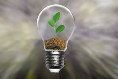 Terra di risparmi dell'albero della pianta di concetto di ecologia immagini stock libere da diritti