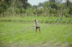 Terra di scavatura della zappa di 60 anni di uso dell'uomo anziano per la piantagione Fotografia Stock Libera da Diritti