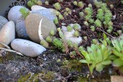 Terra do jardim Imagens de Stock