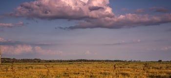 Terra do pântano Imagem de Stock